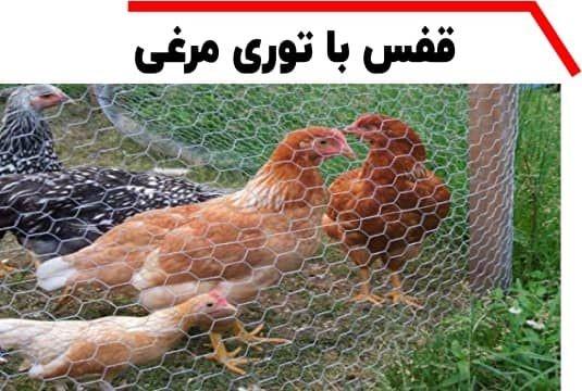 توری مرغی و قفس مرغ