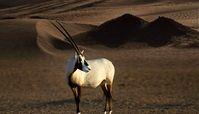 گشت و گذاری کوتاه در اولین پارک ملی دبی