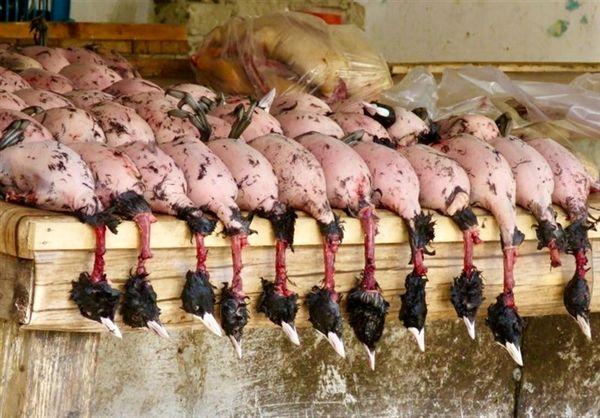 فروش گوشت لاکچری شکار در تهران