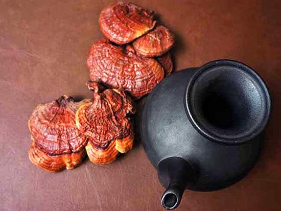 چای گانودرما وخواص شگفت انگیز آن