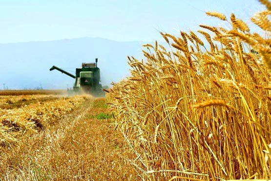 تولید ۴۷۲ هزار تن کُلزا به ظرفیت کشور افزوده شد