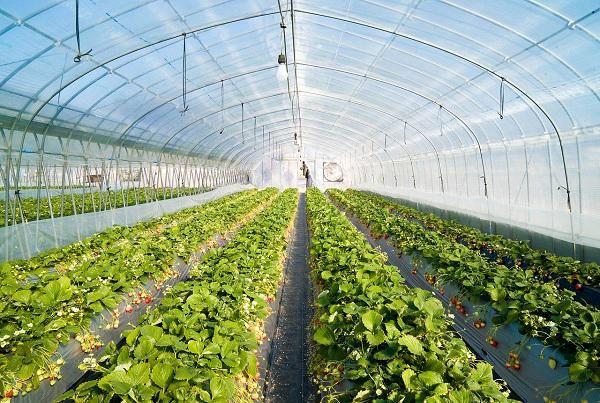 لزوم توسعه گلخانه در شهرکهای کشاورزی