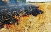 سوزاندن عمدی کاه و کلش مزارع دو سال حبس دارد
