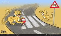 محل عبور یوزپلنگ ایرانی!