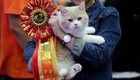 «فشنشو گربهها» در پایتخت