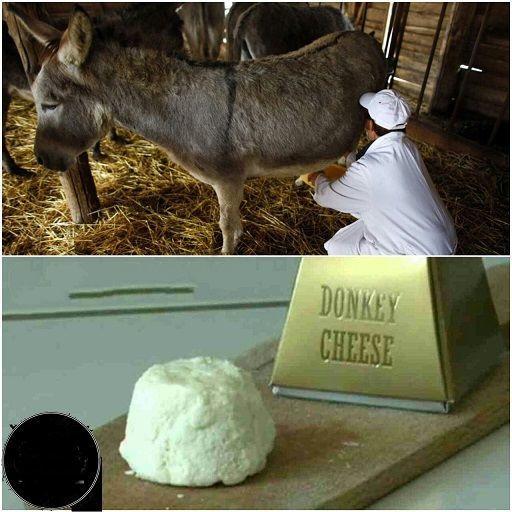 گرانترین پنیر دنیا؛ کیلویی 8 میلیون تومان