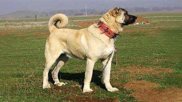 نجات سگ اسیر شده در کانال آب+ فیلم