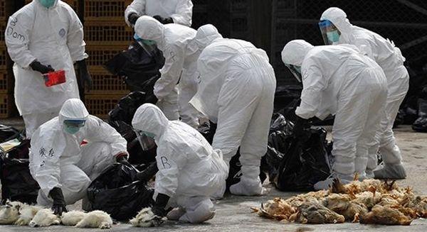 آنفولانزای مرغی به تهران رسید