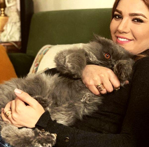 گربه پشمالو متین ستوده + عکس