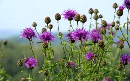 سند راهبردی فرآوری گیاهان دارویی تدوین می شود