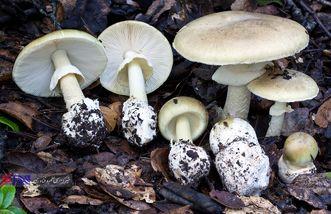 گمانهزنیها درباره رد خرابکاری بیولوژیکی در ماجرای قارچهای آلوده