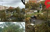سقوط درختان براثر طوفان در آمل