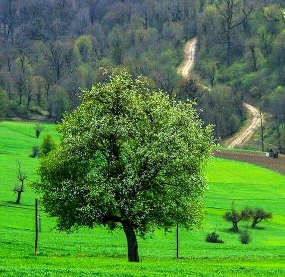 مازندران همیشه زیبا+ عکس