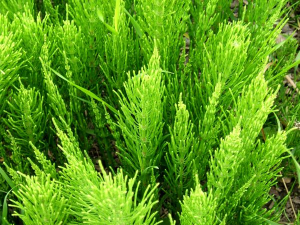 بهترین داروی گیاهی برای ریزش مو