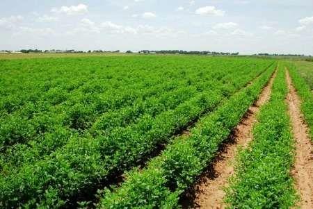 وام کشاورزان خسارت دیده با تصویب دولت تا 3 سال استمهال شد