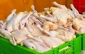 واسطهها بازار مرغ را خراب کردهاند