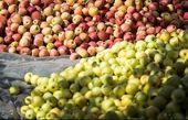 صادرات سیب و پرتقال ممنوع شد