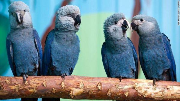 انقراض پرندهای که در سینما به شهرت رسید