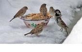 غذا دادن نیوشا ضیغمی به پرندگان در یک روز برفی