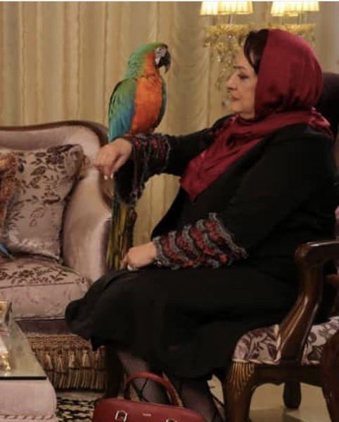 طوطی خانگی مریم امیرجلالی + عکس