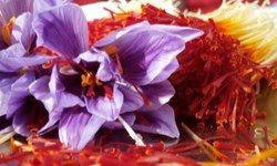 خرید زیر قیمت زعفران توسط دلالان