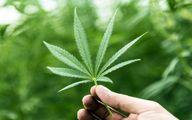 عوارض مصرف گل در نوجوانان شدیدتر است