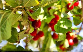 برای کاهش چربی در ناحیه شکم از این میوه غافل نشوید