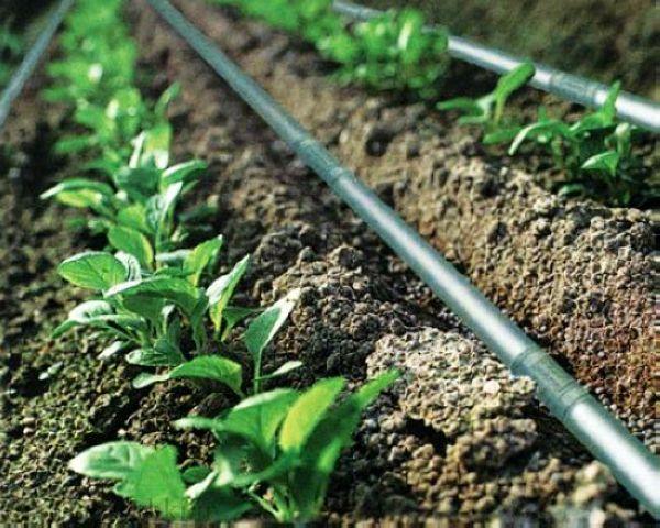 کم آبی و راهکارهای آبیاری و کشاورزی
