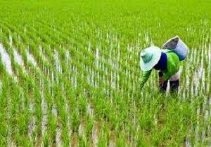 افزایش قیمت آب کشاورزی در مازندران