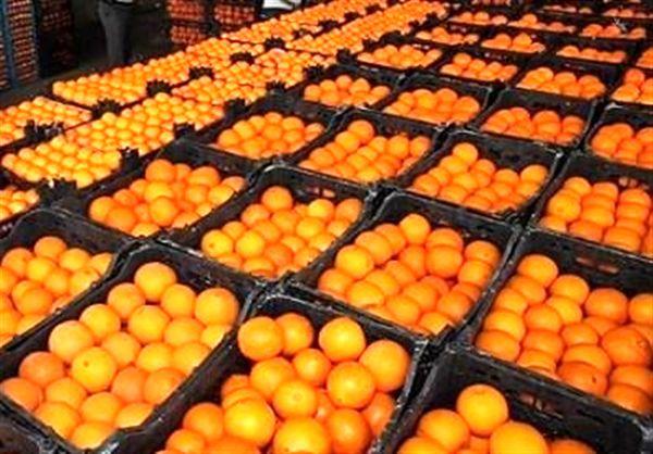 قیمت پرتقال تامسون شمال در بازار