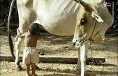 شیر خوردن کودک از منبع اصلی!