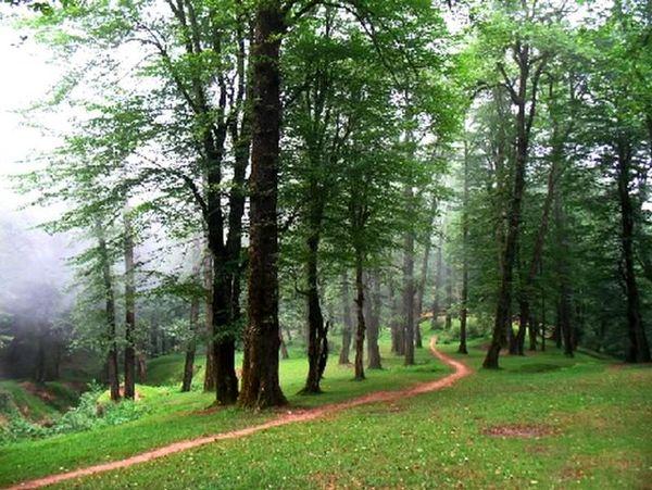 شمال بدون جنگل میشود؟