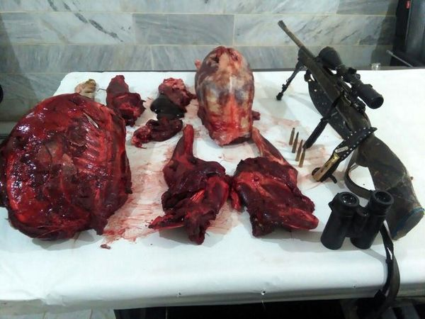 تحمل 20 ماه حبس و ابطال پروانه حمل اسلحه حکم قطعی شکارچی غیرمجاز