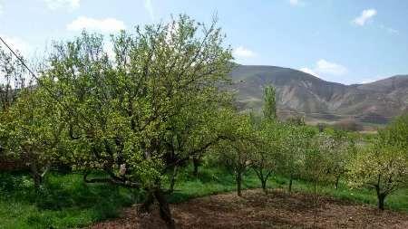 باغداران زنجانی از خسارت سرمای دیررس جلوگیری کنند
