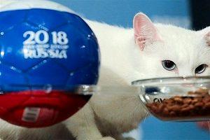 گربه پیشگو نتیجه بازی بلژیک - فرانسه را پیش بینی کرد