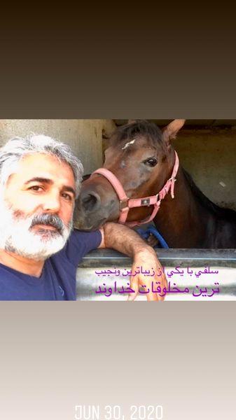 اسب  مهدی صبایی در اصطبل + عکس