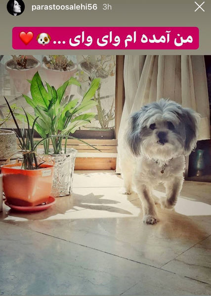 سگ خانگی بامزه پرستو صالحی + عکس