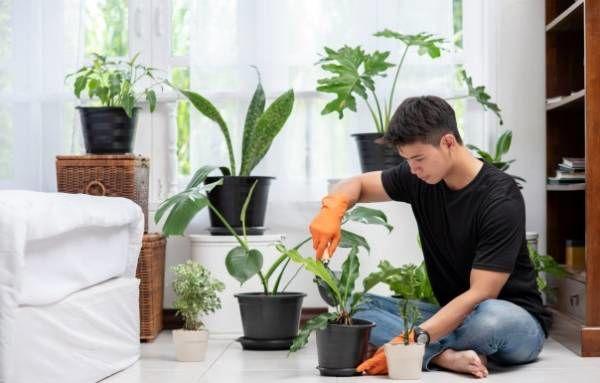 تکنیک های ساده برای پاکسازی هوای خانه