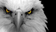 چشم راست، کلید جهت یابی پرندگان