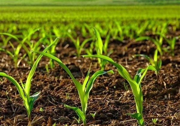 فروش دستگاههای دانهکار ساخت داخل با 7 میلیون تومان یارانه به کشاورزان