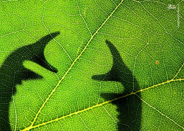 عکسهای برتر حشرات در سال 2020 + تصاویر