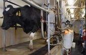 سازمان حمایت: اسناد گرانفروشی شیر را داریم