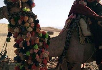 بیابان نوردی فلور نظری با شتر+عکس