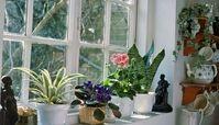 روش تهیه کود خانگی و ارگانیک برای گیاهان خانگی و آپارتمانی