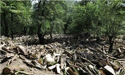 ثبت خاطرات با زخم بر تن درختان+عکس