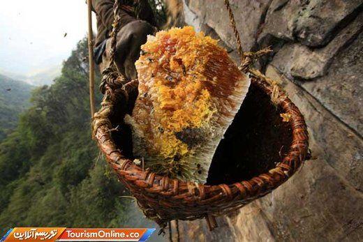 تصاویر | شکار عسل در دامنههای هیمالیا