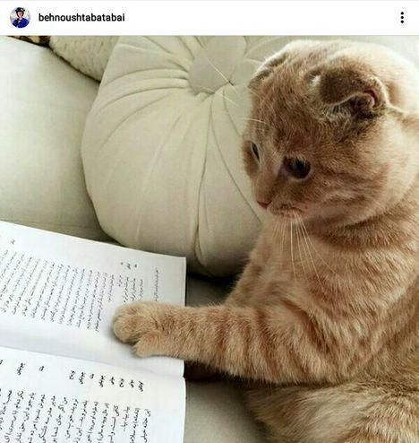 گربه درس خوان بهنوش طباطبایی+عکس