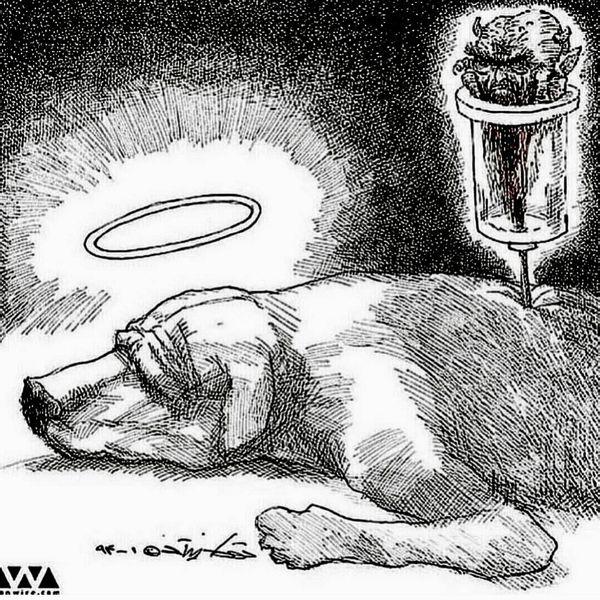 اعتراض محمدرضا فروتن به سگ کشی