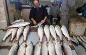 ماهیهای فصل پاییز شمال را بشناسید