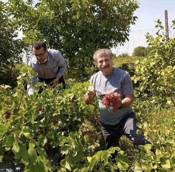 مهران رجبی در باغ انگور + عکس